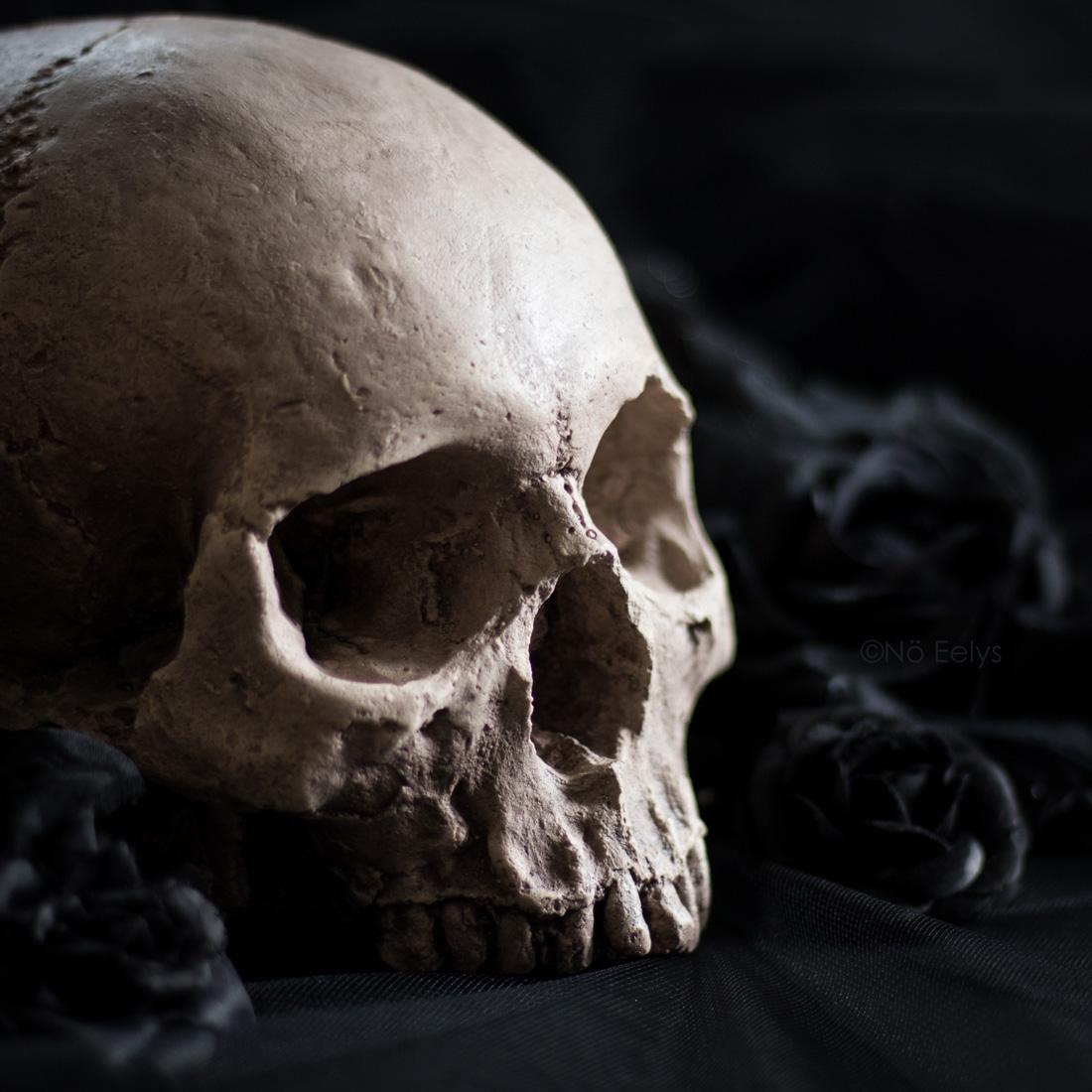 Zoom sur la réplique de crâne humain fait main par Vicious Noodles (déco d'inspiration gothique et victorienne)